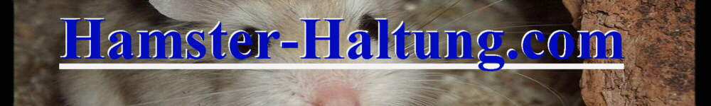 Alles über richtige Hamsterhaltung